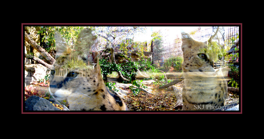 Skj Photography Cats